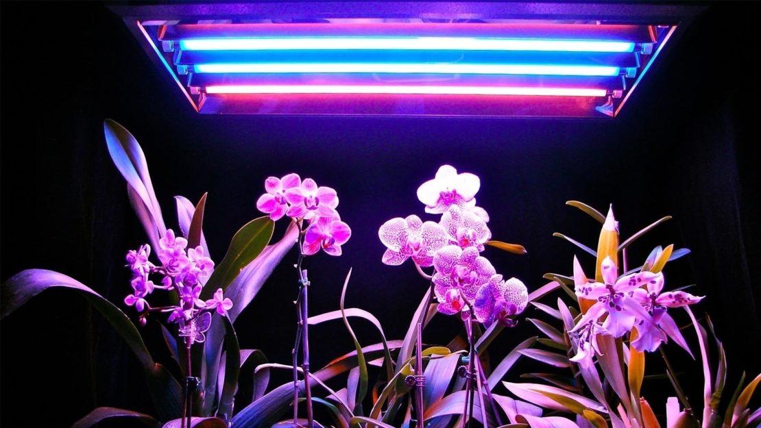 освещение для орхидеи