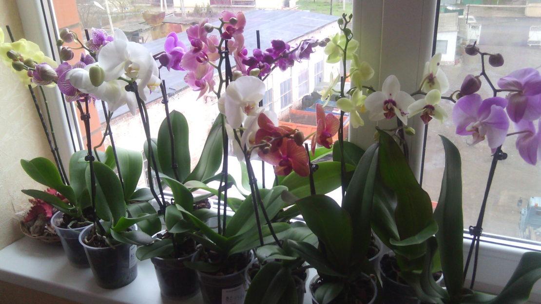 Общие правила ухода за орхидеей