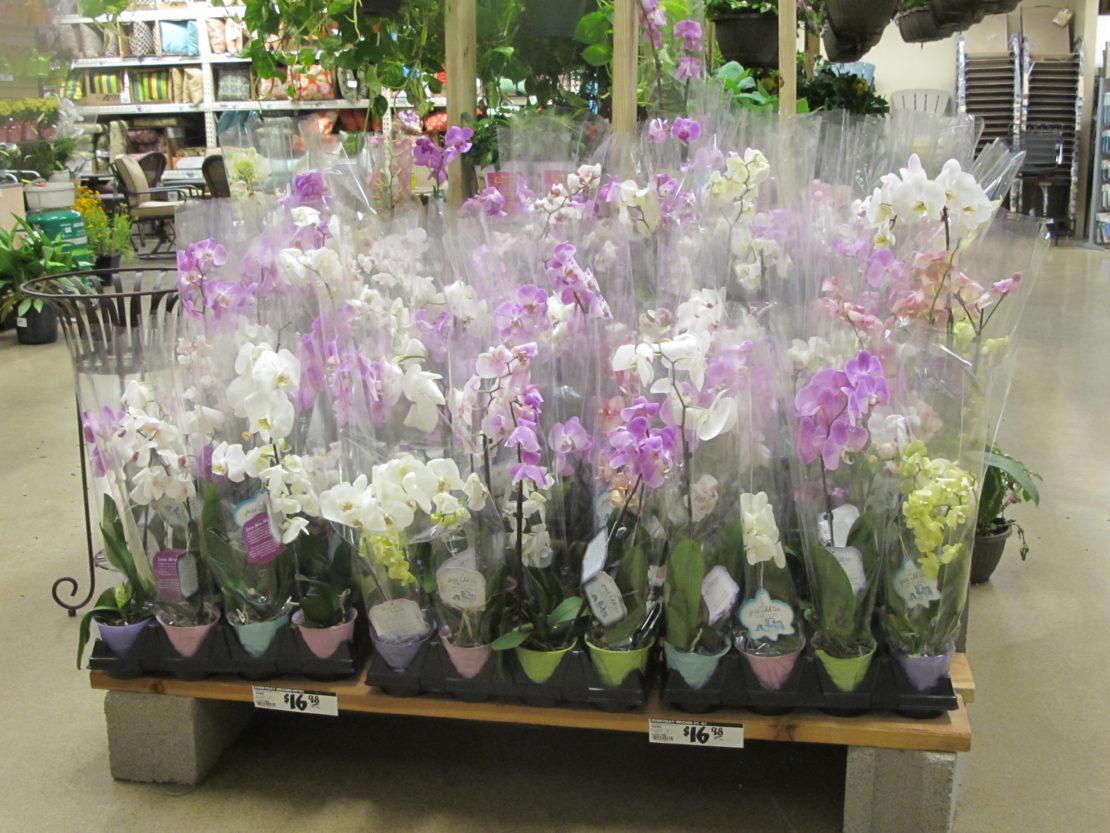 покупка орхидеи в магазине