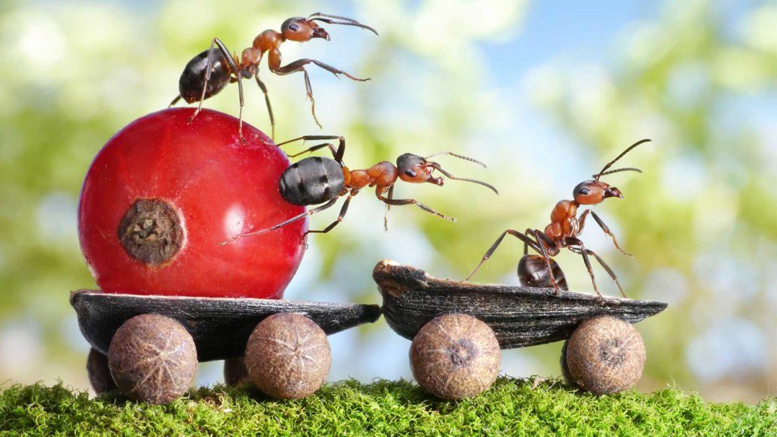 Причины появления муравьев