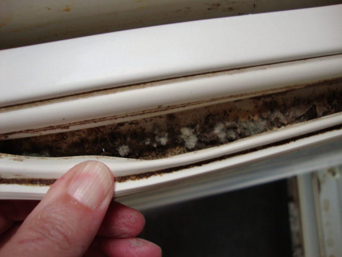 плесень в резинке холодильника