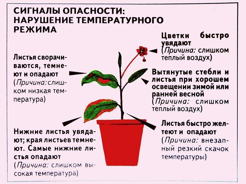 температура для орхидеи