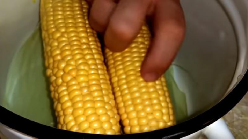 определяем готовность кукурузы