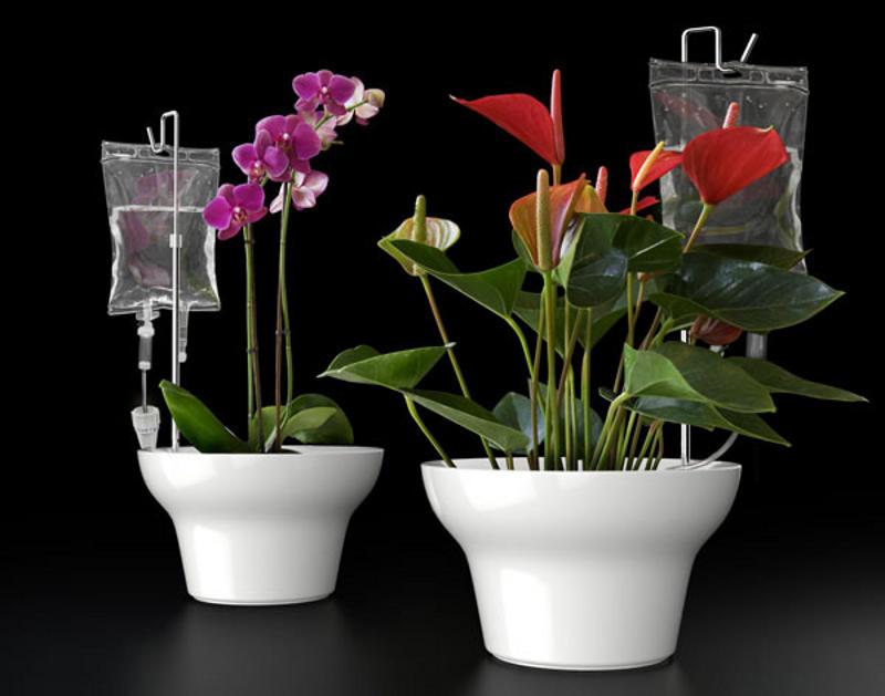 полив для комнатных цветов