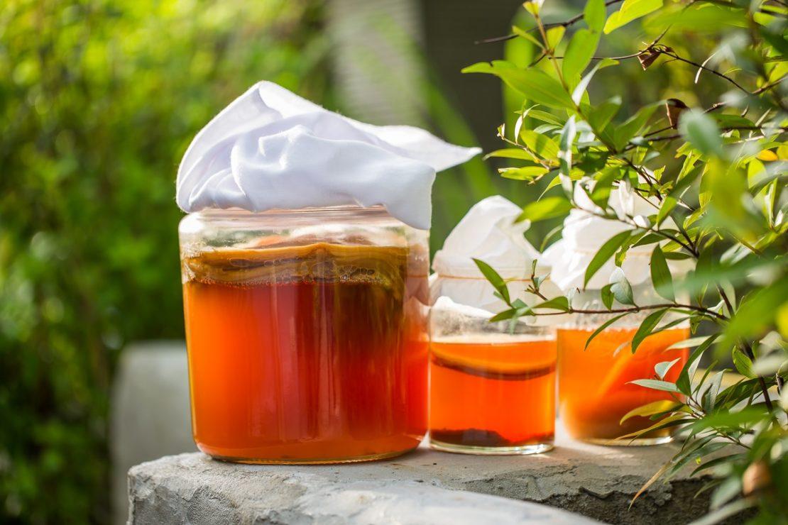 чайный гриб из зеленого чая