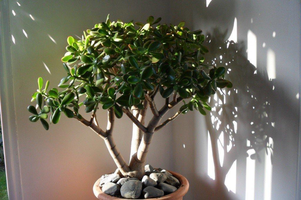 освещение для денежного дерева